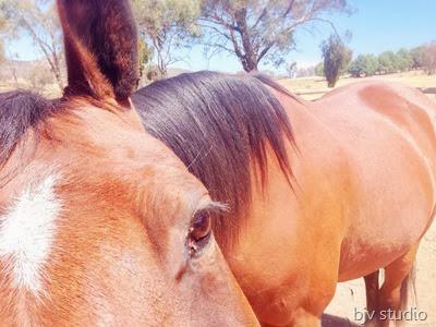 Copper says Hai! - A Riding Habit