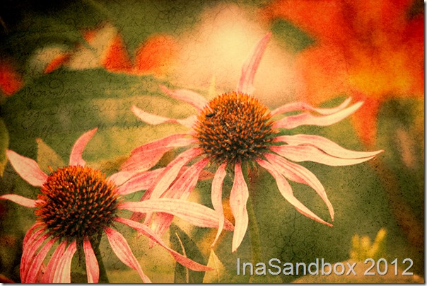 Echinacea giants with Topaz Adjust autumn