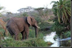 October 17, 2012 elephant in stream