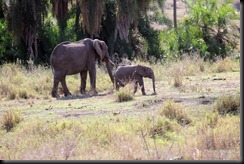 October 18 2012 Mom & baby elephant