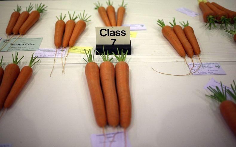 giant-vegetables-1