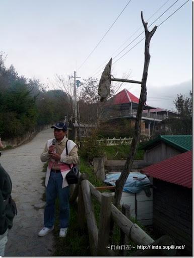 司馬庫斯部落的天然木頭路燈