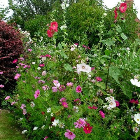 front garden flower border