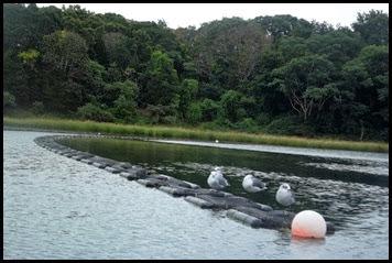 Kayaking Salt Pond & Nauset Marsh 012