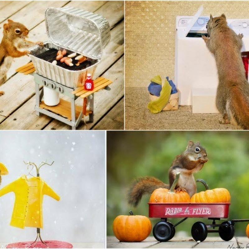Nancy Rose's Adorable Squirrels