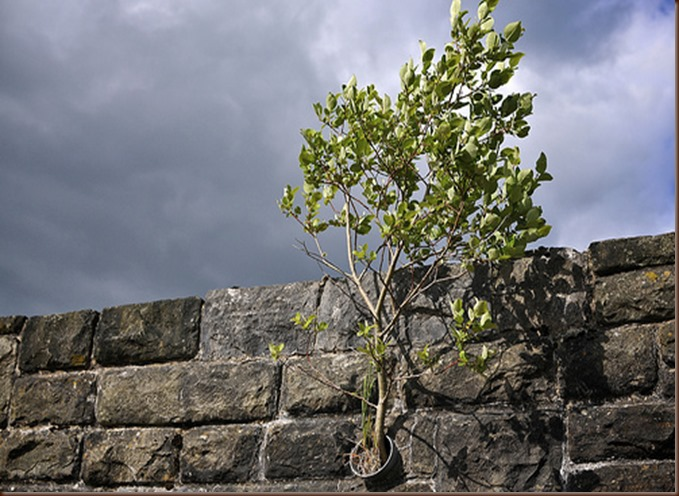 Break wall with tree