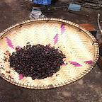 Fertig gerösteter Kaffee © Foto: Doreen Schütze | Outback Africa