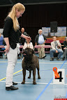 20130510-Bullmastiff-Worldcup-0926.jpg