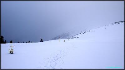 La iesirea din padure: ceata si zapada Mare