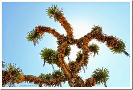 150324_SanDiego_BalboaPark_DesertGarden_030