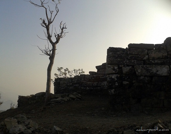 Chaudandi-Gadhi-Udayapur-tree