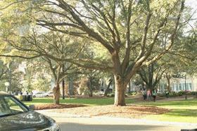 Savannah scenes 7
