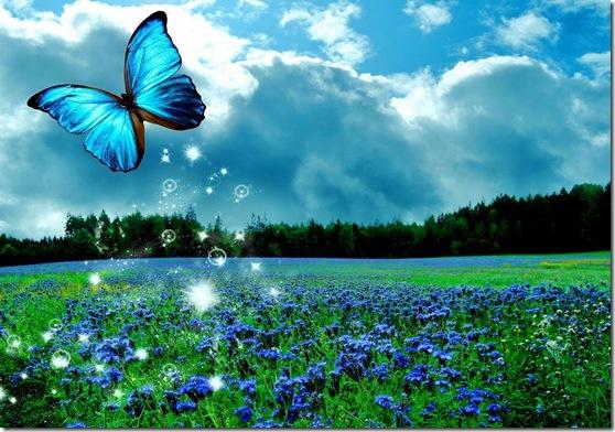 linda borboleta azul