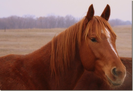 horses 021-001ab