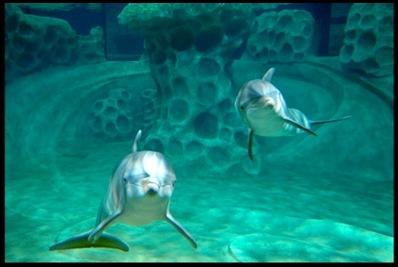 georgia aquarium5