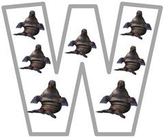 Ww walrus