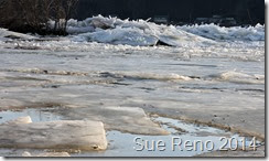 Susquehann River ice jam, by Sue Reno, Image 8