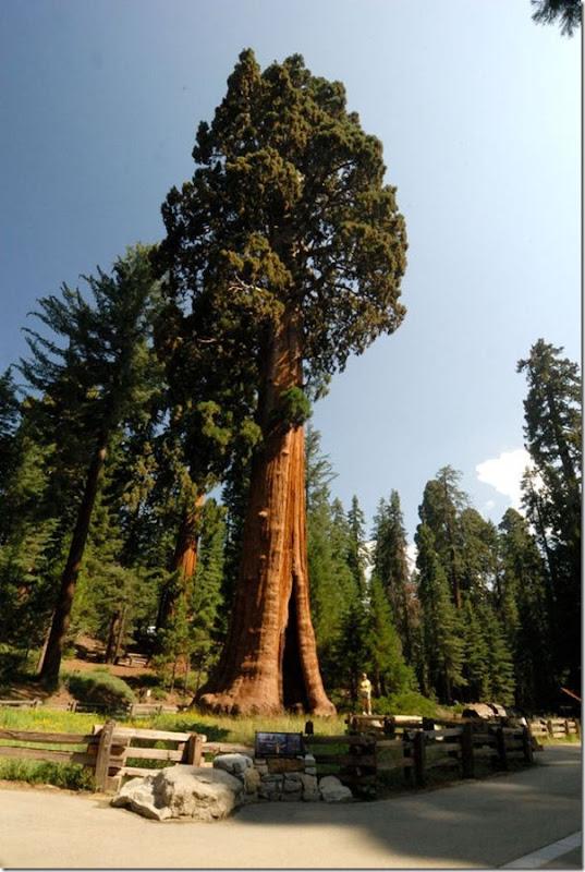 imagens das sequois do Parque Nacional Redwood (9)