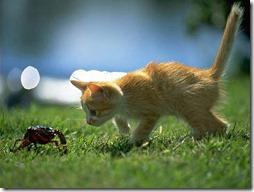 10 -Fotos de gato buscoimagenes (37)