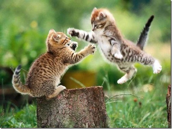 fighting-kittens