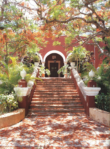 The entrance to Hacienda Chimay is made even more alluring by the bed of blossoms covering its staircase, which shed off of the canopy of Flamboyant trees above.