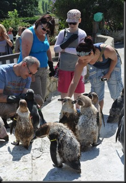 Snaith family feeding the moulting Penguins DSC_1095