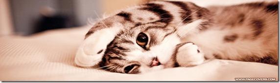 cute_lazy_kitten_cat