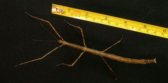 how to look after your stick insects