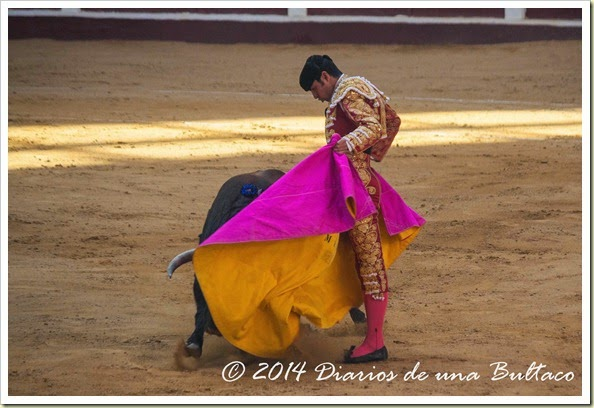 Toros 2014 (1)-21