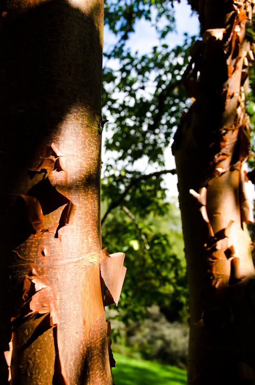 Light on bark