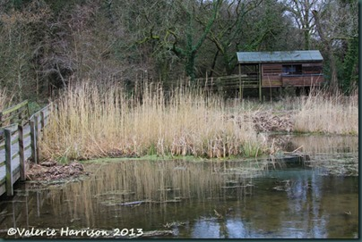 28-pond-and-hide