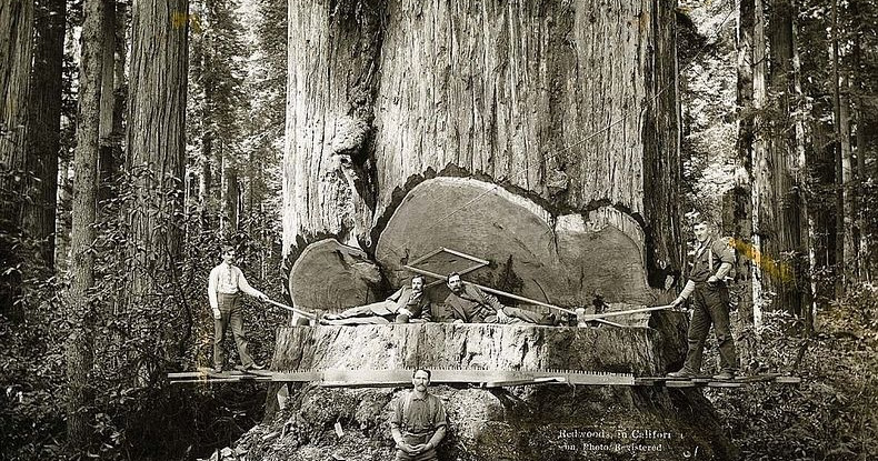 http://lh4.ggpht.com/-viEhggc68Uk/UID0x1j8ZLI/AAAAAAAAfOA/hkcso6GuEjg/w1200-h630-p-k-no-nu/lumberjacks-redwood-9%25255B6%25255D.jpg?imgmax=800