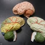 brain_models_03.JPG