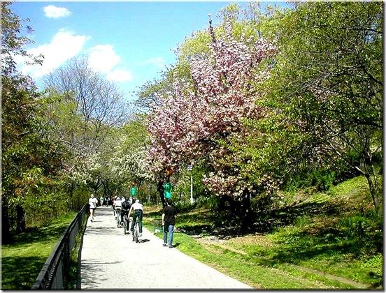 Andar de bike na primavera!