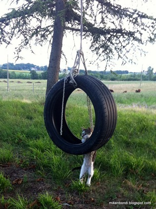 Milkshake and tire swing