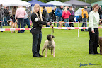 20100513-Bullmastiff-Clubmatch_30941.jpg