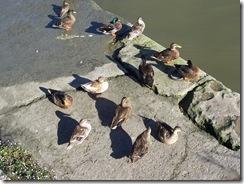2012.08.17-009 canards