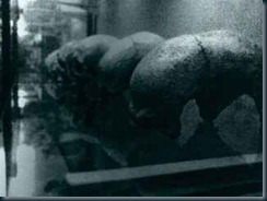 Klaus-Dona-cranios-deformados