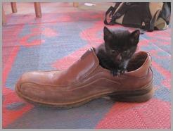 catinshoe