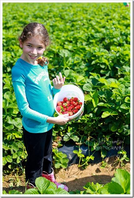 strawberryfields-4927