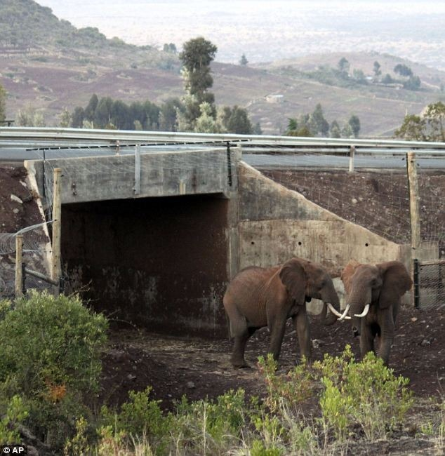 wildlife-crossings-7