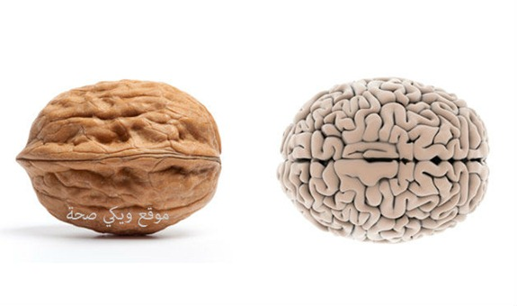 02-Walnut-BrainFoods-That-Look-Like-Body-Parts-1