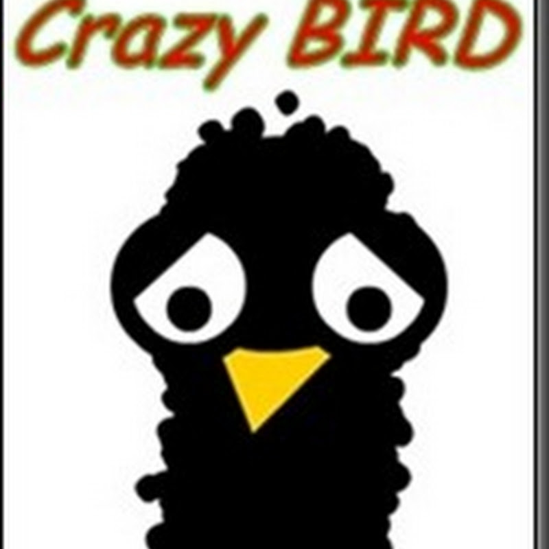 Jogo Crazy BIRD um pssaro muito louco no seu Android