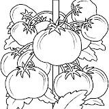 tomates-2.jpg