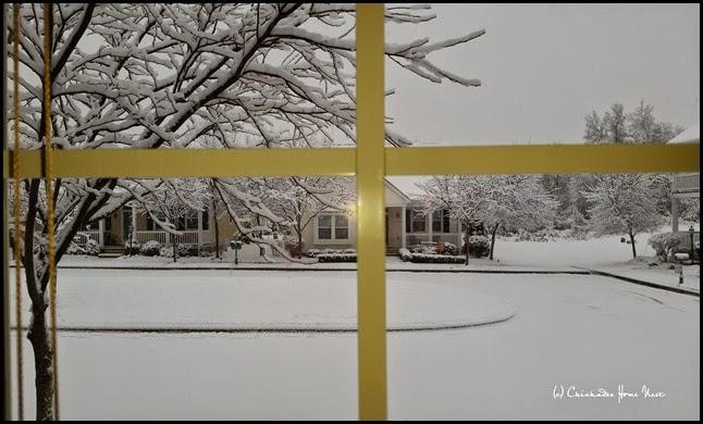 Snow, Winter Wonderland (4)