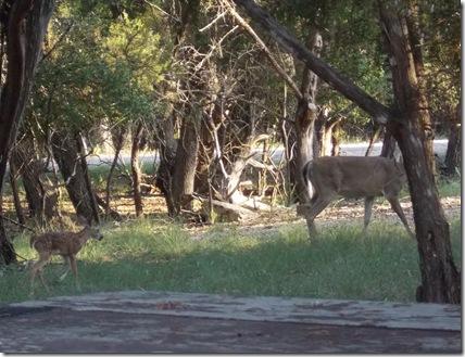 Deer visit 019