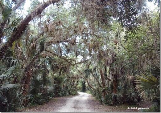 Cabin Road 002