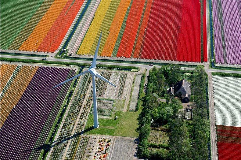 tulip-field-7