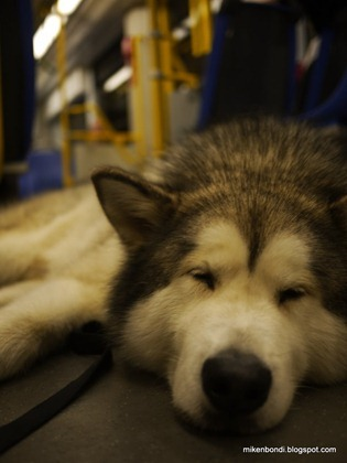 tired Munson