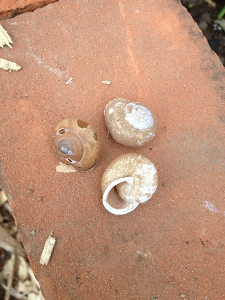 20120531 snail shells